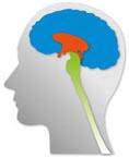 Trójdzielny mózg